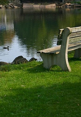 A bench on the grass looks over a pond with a duck swimming.